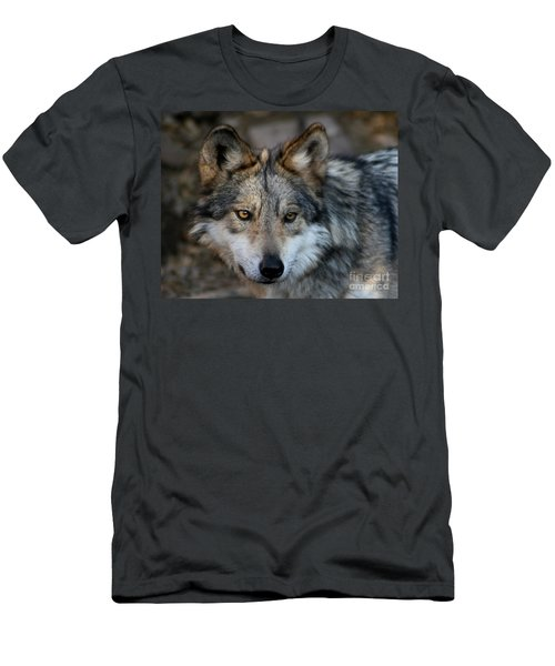 Grey Wolf Men's T-Shirt (Athletic Fit)