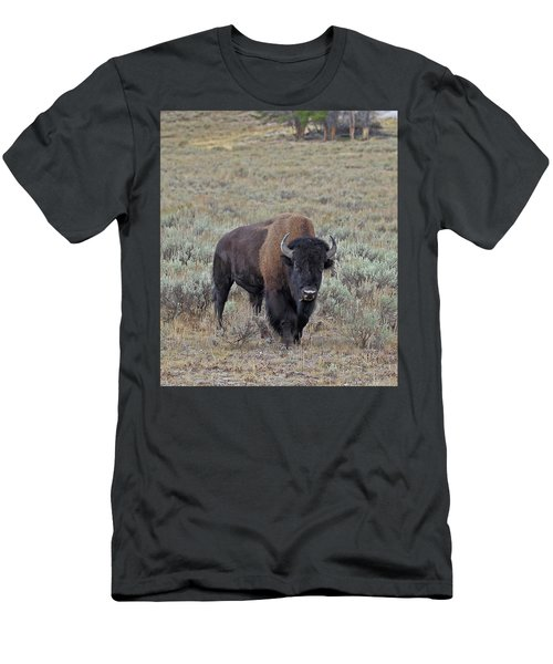 Handsome Bison Bull Men's T-Shirt (Athletic Fit)