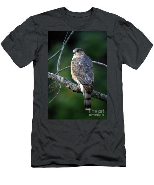 Handsome Sharp Shinned Hawk Men's T-Shirt (Athletic Fit)