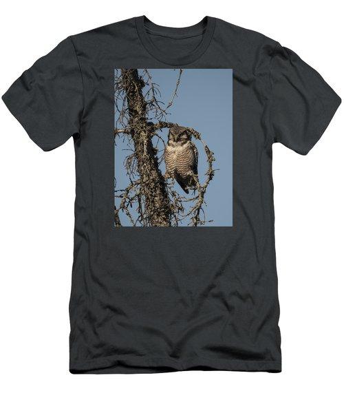 Hawk Owl Gaze Men's T-Shirt (Athletic Fit)