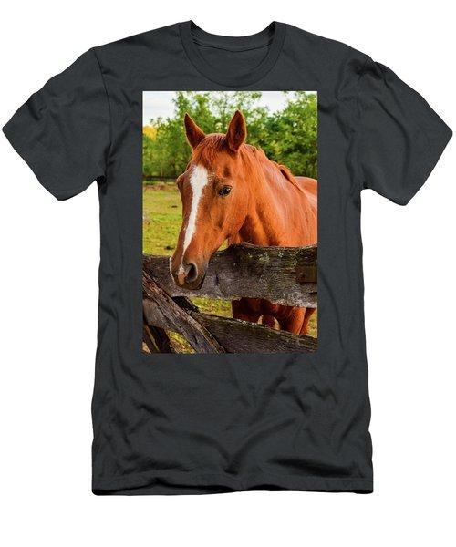 Horse Friends Men's T-Shirt (Athletic Fit)