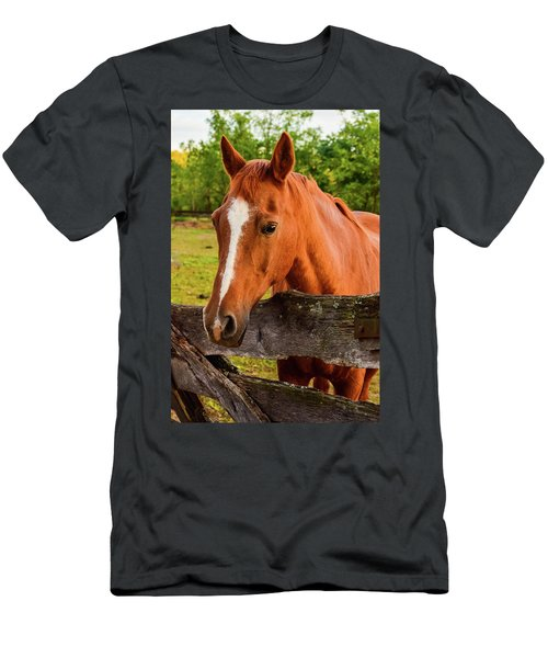 Horse Friends Men's T-Shirt (Athletic Fit)