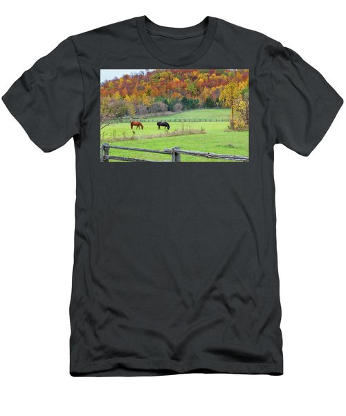 Horses Contentedly Grazing In Fall Pasture Men's T-Shirt (Athletic Fit)