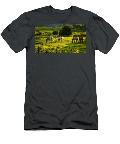 Horses Grazing In Evening Light Men's T-Shirt (Athletic Fit)