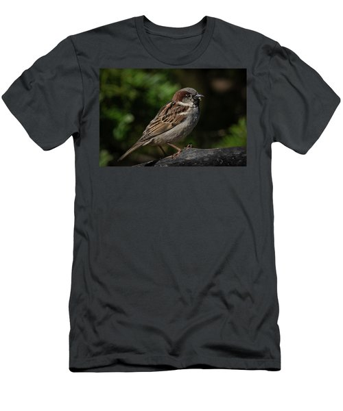 House Sparrow 2 Men's T-Shirt (Slim Fit) by Kenneth Cole