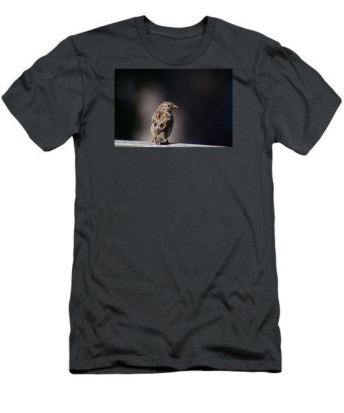 House Sparrow Men's T-Shirt (Athletic Fit)