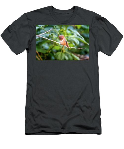 Humming Bird On Stick Men's T-Shirt (Slim Fit) by Stephanie Hayes