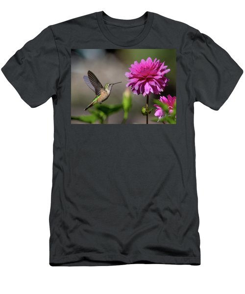 Hummingbird And Pink Zinnia Men's T-Shirt (Athletic Fit)