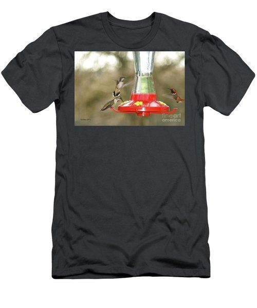 Hummingbird Trio Men's T-Shirt (Athletic Fit)