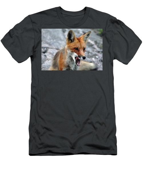 Hungry Red Fox Portrait Men's T-Shirt (Slim Fit) by Debbie Oppermann