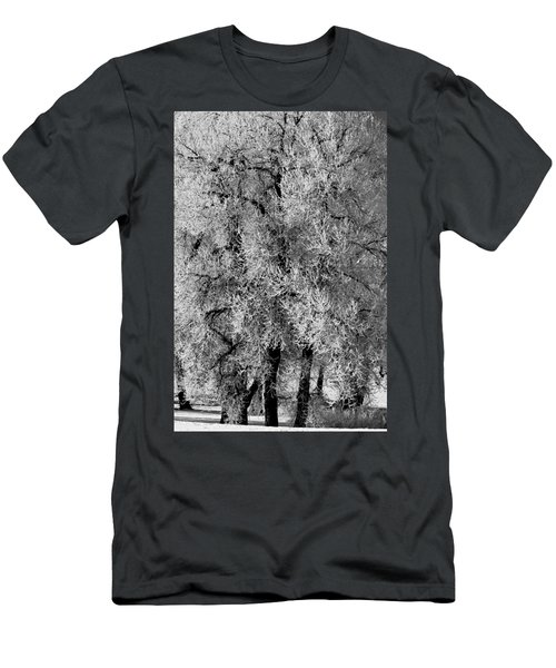 Iced Cottonwoods Men's T-Shirt (Slim Fit) by Colleen Coccia