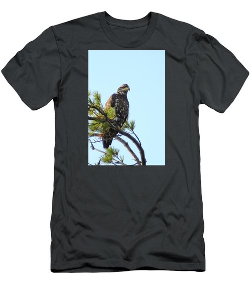Immature Bald Eagle 1 Men's T-Shirt (Athletic Fit)