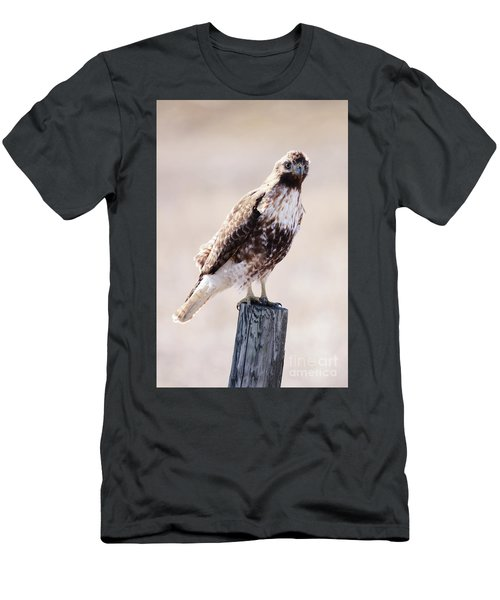 Immature Red Tailed Hawk Men's T-Shirt (Athletic Fit)