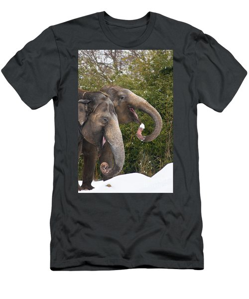 Indian Elephants Eating Snow Men's T-Shirt (Athletic Fit)