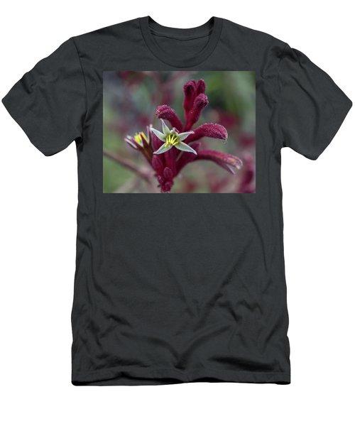 Kangaroo Paw Men's T-Shirt (Athletic Fit)