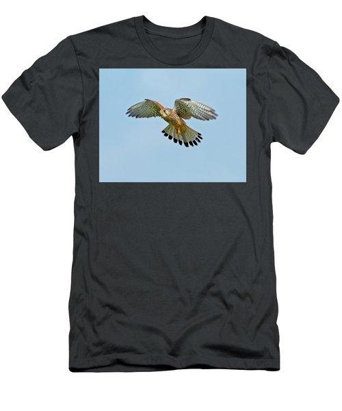 Kestrel In The Wind . Men's T-Shirt (Slim Fit) by Paul Scoullar