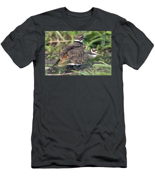 Killdeer With Chicks Men's T-Shirt (Slim Fit) by Craig Strand