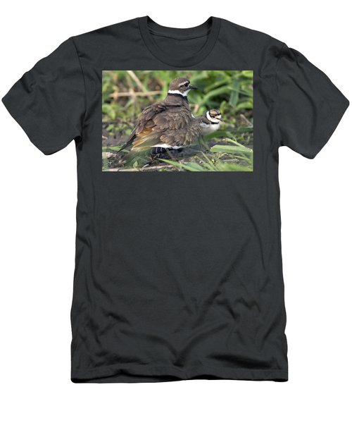 Killdeer With Chicks Men's T-Shirt (Athletic Fit)