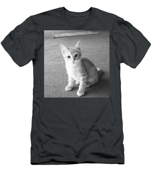 Kitten Men's T-Shirt (Athletic Fit)