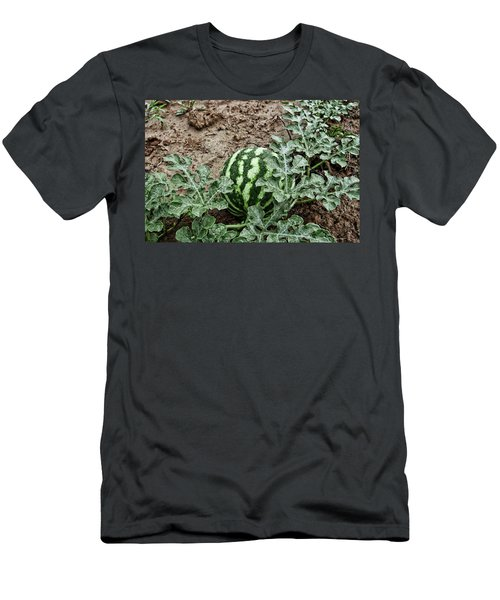 Ky Watermelon Men's T-Shirt (Athletic Fit)