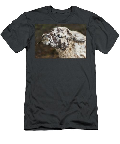 Lady Llama Men's T-Shirt (Athletic Fit)