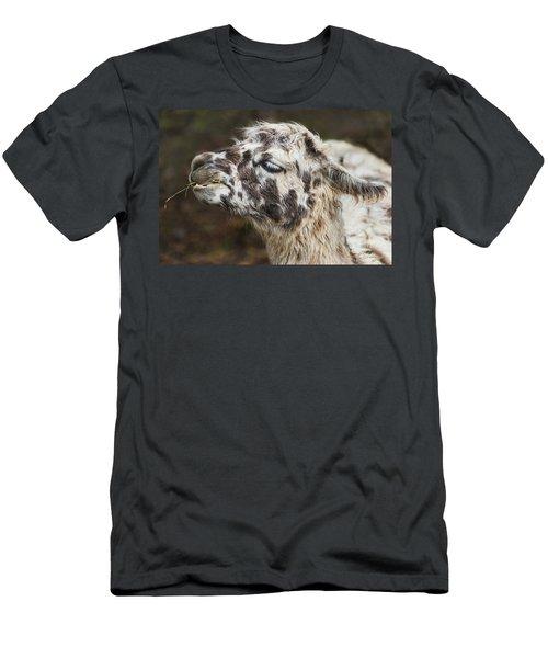 Lady Llama Men's T-Shirt (Athletic Fit)