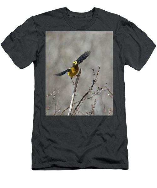 Liftoff-male Evening Grosbeak Men's T-Shirt (Athletic Fit)