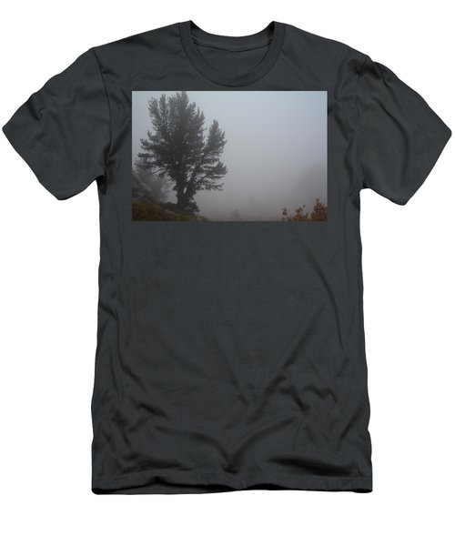 Limber Pine In Fog Men's T-Shirt (Slim Fit) by Jenessa Rahn