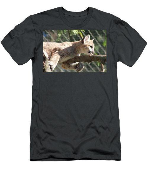 Men's T-Shirt (Slim Fit) featuring the photograph Lion Around by Laddie Halupa