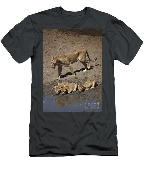 Lion Cubs And Mom Get A Drink Men's T-Shirt (Slim Fit) by Darcy Michaelchuk