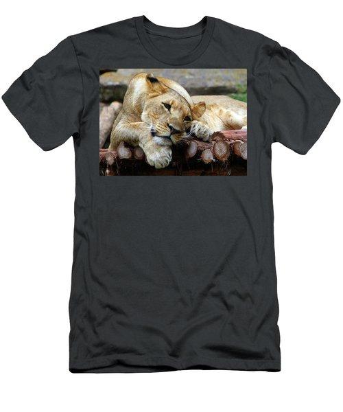 Lion Resting Men's T-Shirt (Slim Fit) by Inspirational Photo Creations Audrey Woods
