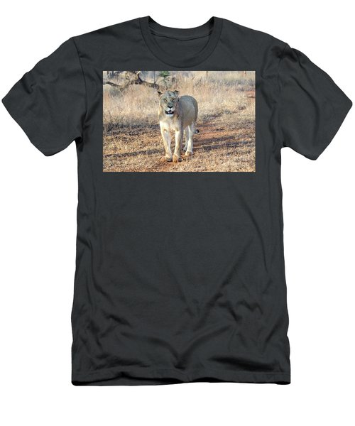 Lioness In Kruger Men's T-Shirt (Slim Fit) by Pravine Chester