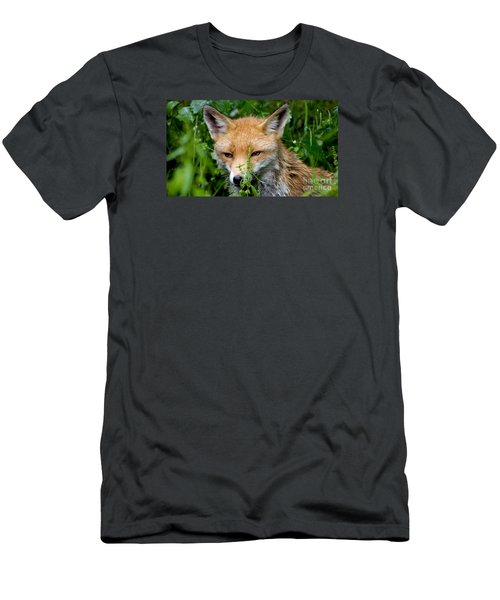 Little Baby Fox Men's T-Shirt (Athletic Fit)