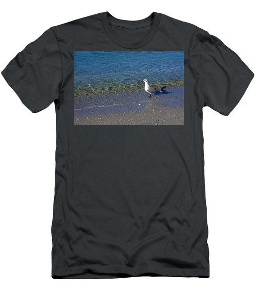 Lone Seagull At Miramar Beach In Naples Men's T-Shirt (Athletic Fit)