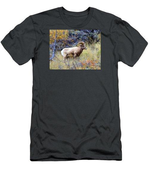 Long Horns Sheep Men's T-Shirt (Slim Fit) by Irina Hays