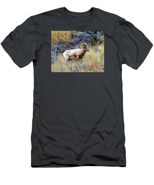 Long Horns Sheep Men's T-Shirt (Athletic Fit)