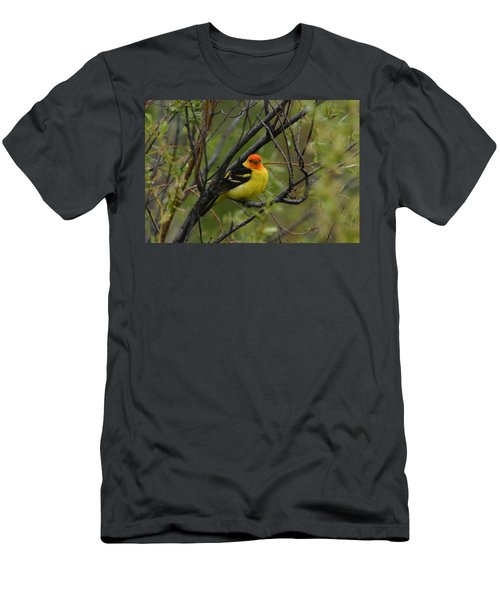 Looking At You - Western Tanager Men's T-Shirt (Athletic Fit)