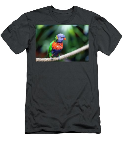 Lorikeet Men's T-Shirt (Athletic Fit)