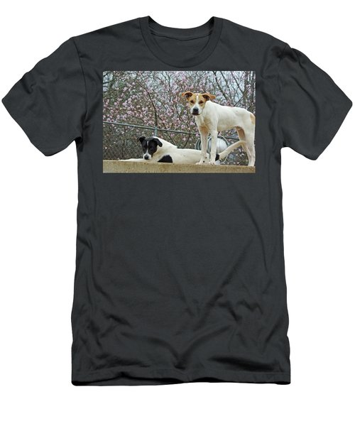 Maddy And Sammy Springtime Men's T-Shirt (Athletic Fit)