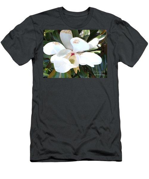 Magnolia Tree Bloom Men's T-Shirt (Slim Fit) by Debra Crank