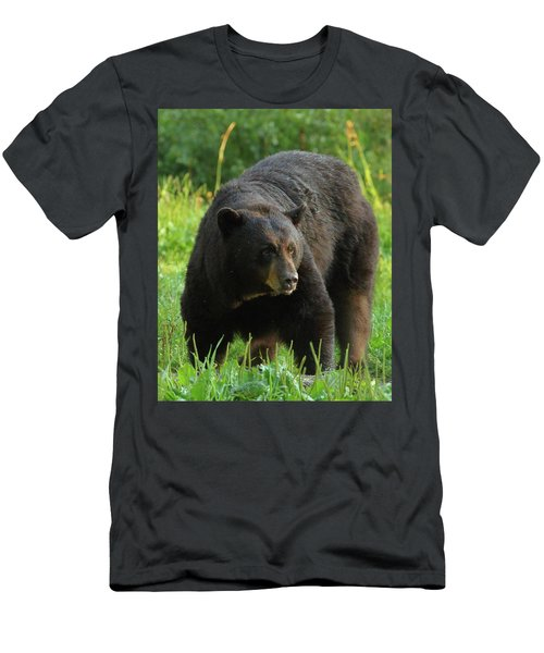 Men's T-Shirt (Slim Fit) featuring the photograph Male Black Bear In Late Light by Coby Cooper