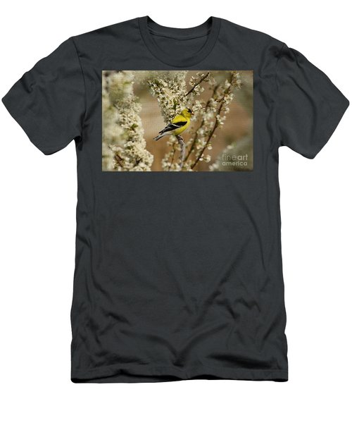 Male Finch In Blossoms Men's T-Shirt (Athletic Fit)