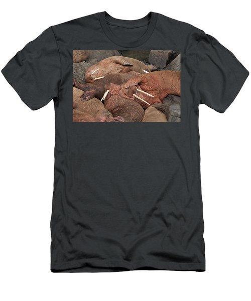 Male Pacific Walrus  Odobenus Rosmarus Men's T-Shirt (Athletic Fit)