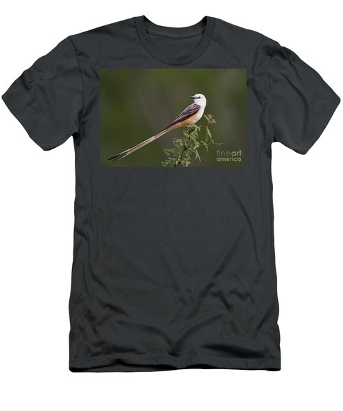 Male Scissor-tail Flycatcher Tyrannus Forficatus Wild Texas Men's T-Shirt (Athletic Fit)
