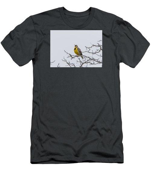Meadowlark In Tree Men's T-Shirt (Athletic Fit)
