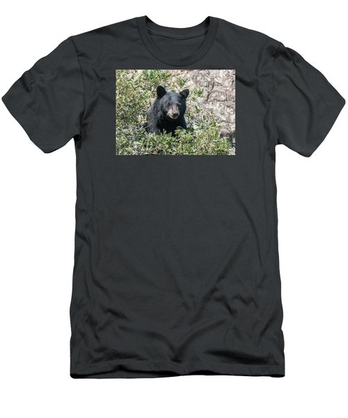 Momma Black Bear Eating Berries Men's T-Shirt (Athletic Fit)