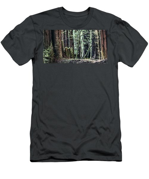 Men's T-Shirt (Slim Fit) featuring the photograph Morning Redwoods by Shirley Mangini