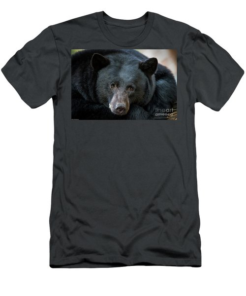 Mother Bear Men's T-Shirt (Slim Fit) by Mitch Shindelbower