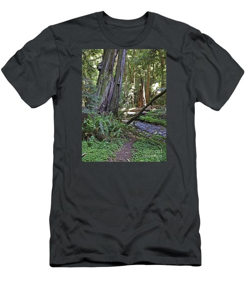 Muir Woods Beauty Men's T-Shirt (Athletic Fit)