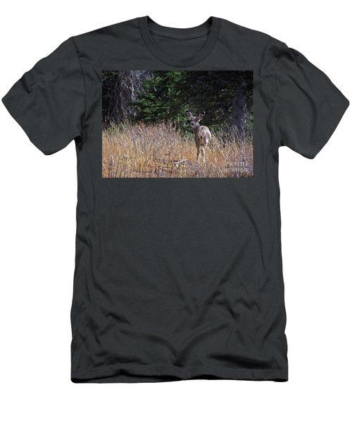 Mule Deer In Utah Men's T-Shirt (Slim Fit) by Cindy Murphy - NightVisions